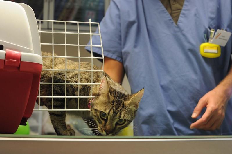 Vétérinaire chat