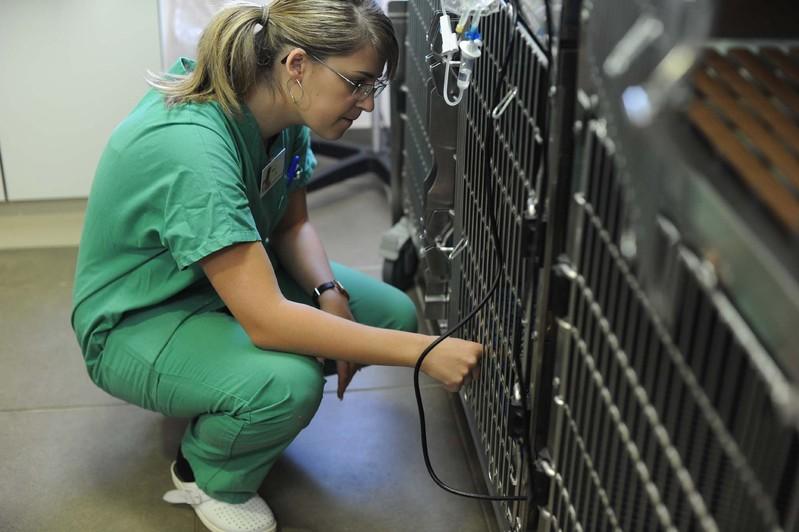 Hospitalisation vétérinaire