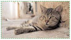 Le FIV chez le chat