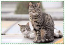 Fibrosarcome du chat