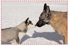 Sociabilisation-chiens