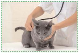 Visite vétérinaire