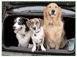 Règlementation voyage chien