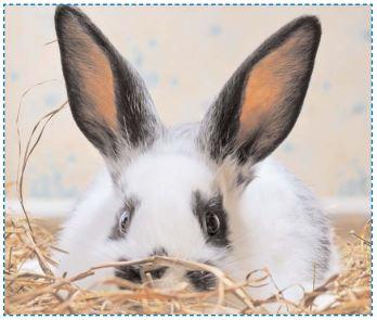 J'adopte un lapin