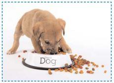 un chien qui mange dans sa gamelle