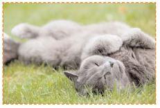 un chat se roule dans l'herbe