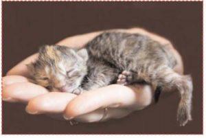 Un chaton nouveau-né