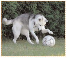 un chien joue avec un ballon