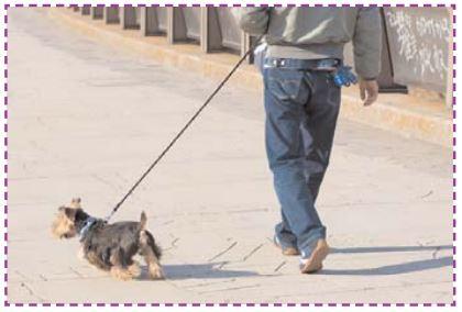 Comment tenir son chien en laisse ?