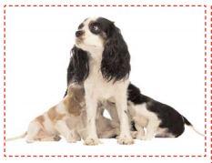 Mère chienne avec ses chiots