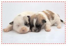 Deux chiots endormis