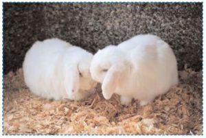 Changez la litière du lapin