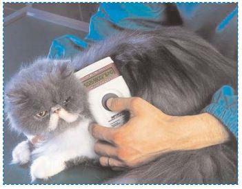 quelle méthode pour identifier un chat ?