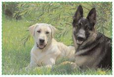 Leptospirose chien