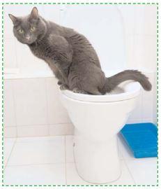 Les maladies du bas appareil urinaire du chat