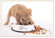 un petit chien mange