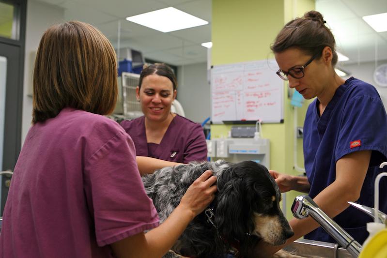 Clinique vétérinaire Montpellier