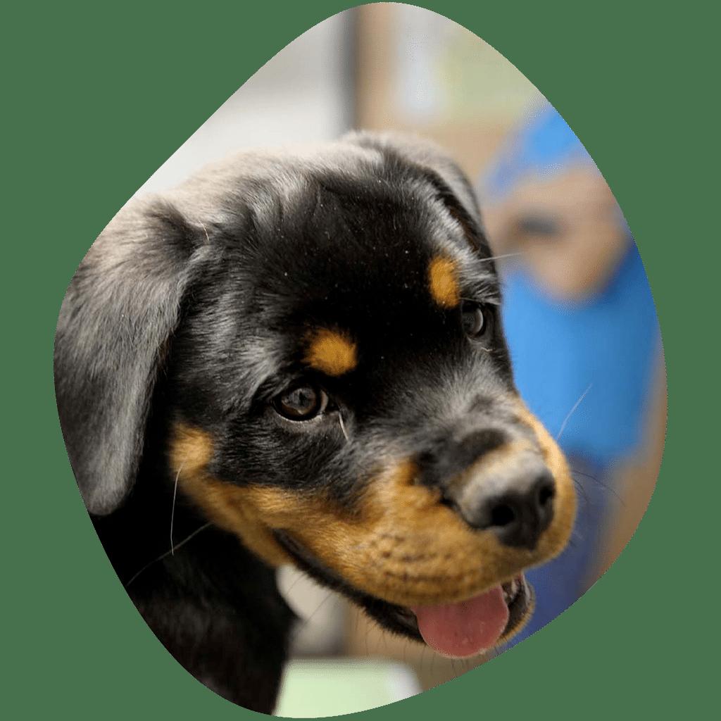 Clinique vétérinaire à Saint Jean de Vedas