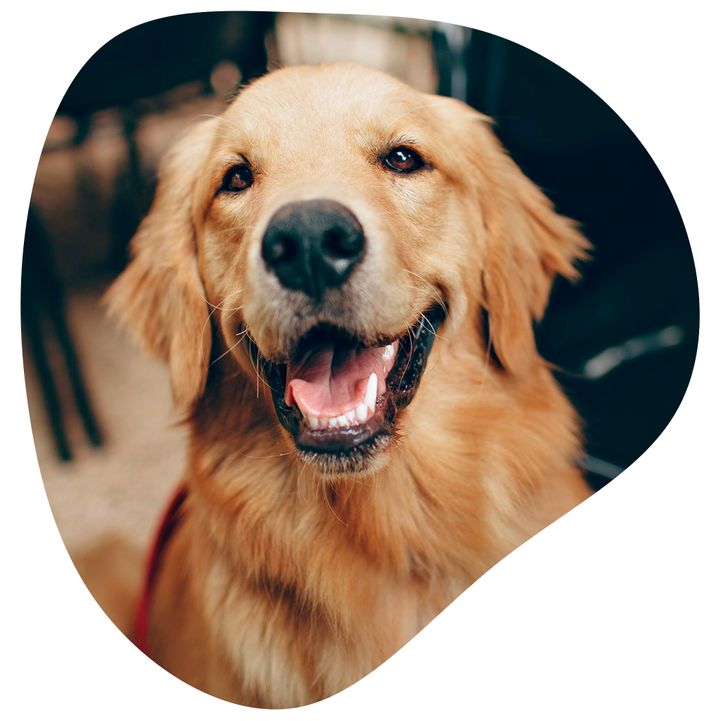 Diététique et nutrition animale - Clinique vétérinaire Orthovet