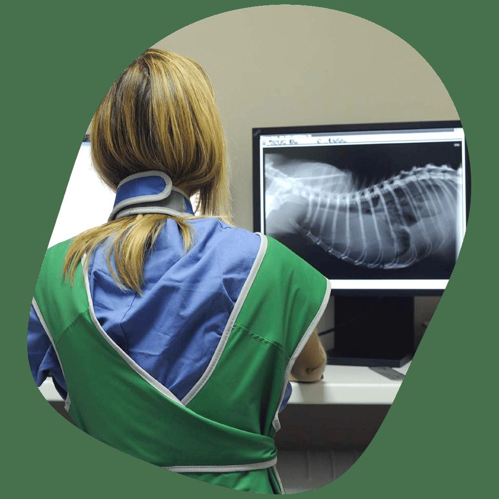 Imagerie médicale et interventionnelle - Clinique vétérinaire Orthovet