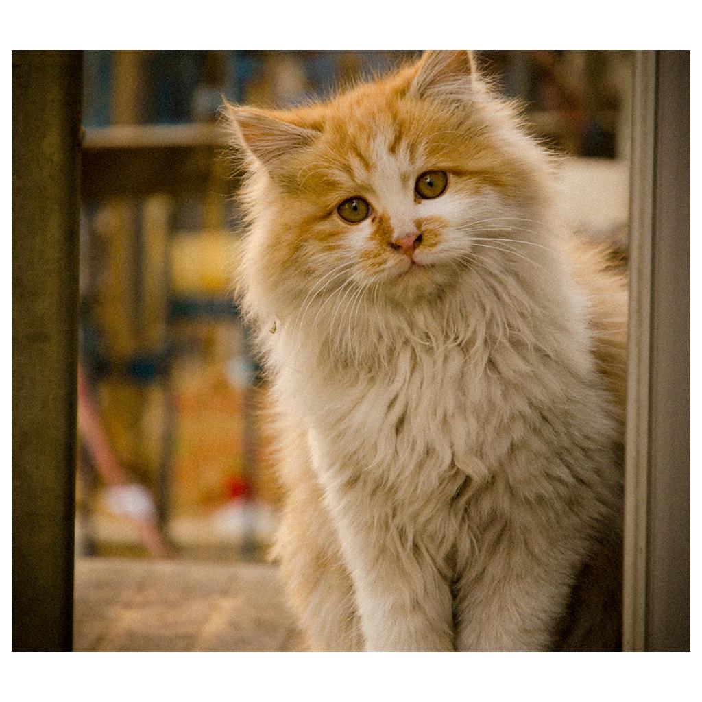 Soins vétérinaires pour les chats et chiens