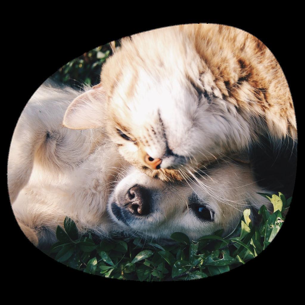 Soins chiens et chats - Clinique vétérinaire à Montpellier agglomération