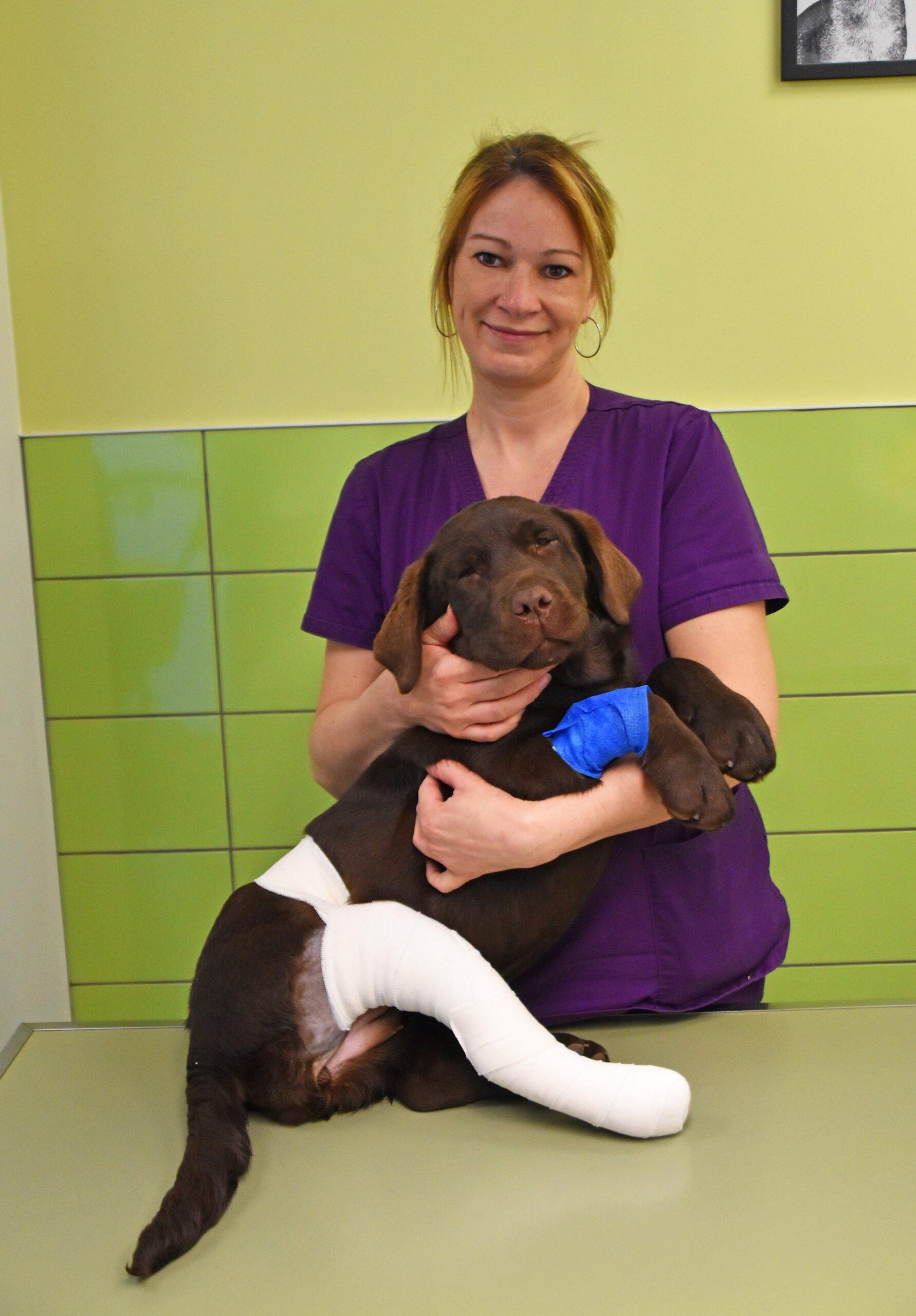 L'équipe médicale de la clinique vétérinaire Orthovet, Elodie
