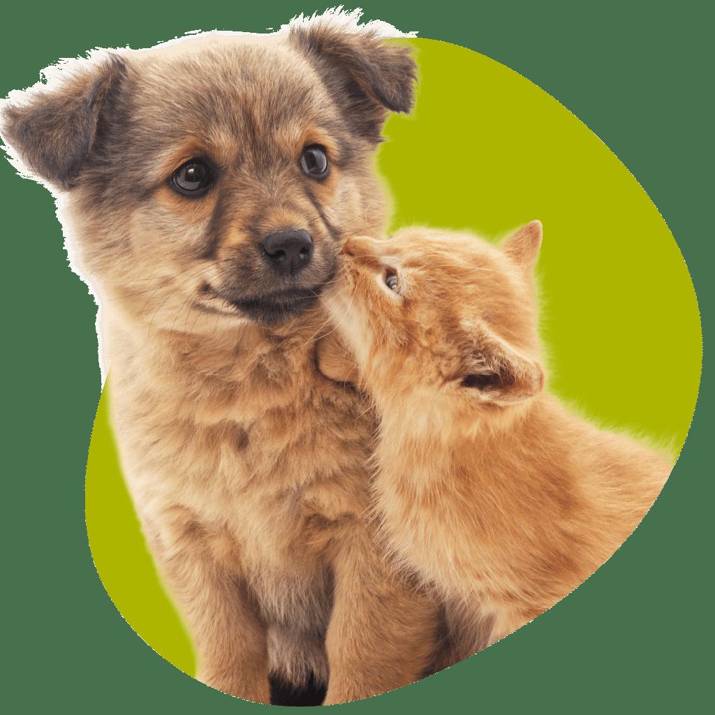 Soins de vos animaux de compagnie chient et chat - Clinique vétérinaire Orthovet