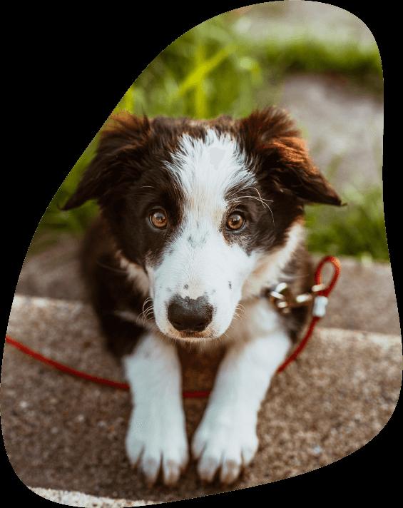 Fibroscopie chez le chien