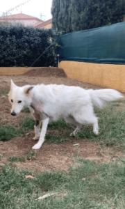 hiska opération vétérinaire